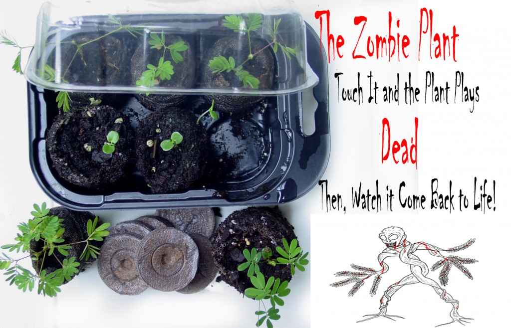 Zomday 39 s zombie blog everything zombie jokes news events and more - Cool plants to grow inside ...